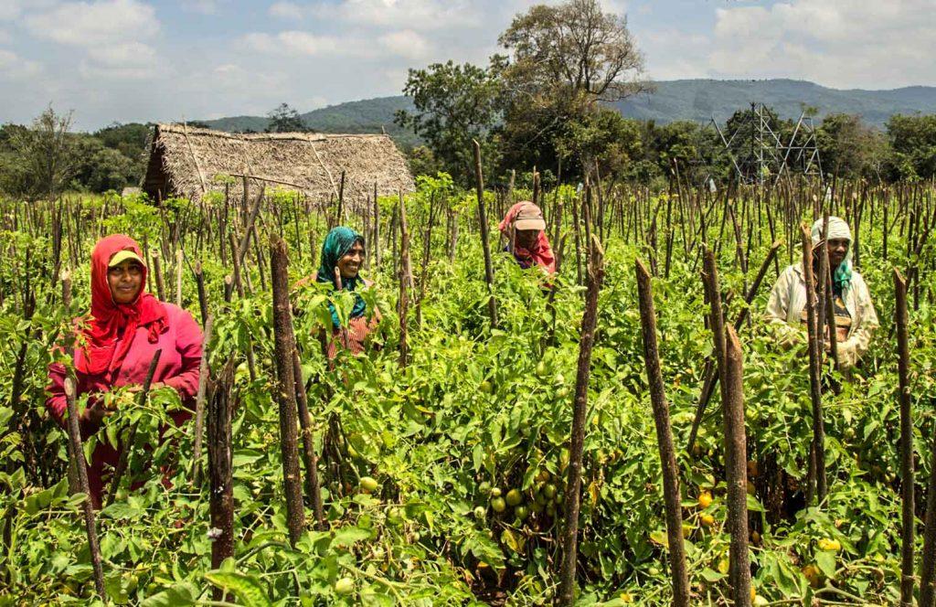 Agriculture around Dehigaha Ela