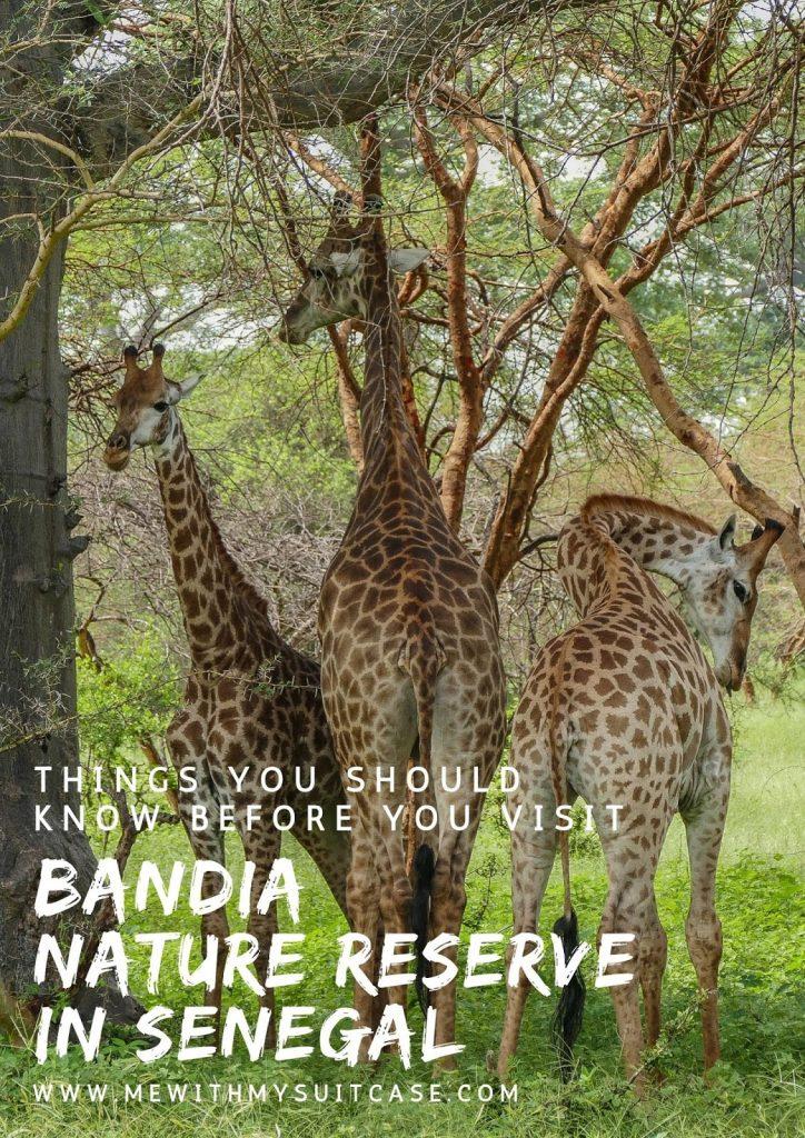 Réserve de Bandia Senegal