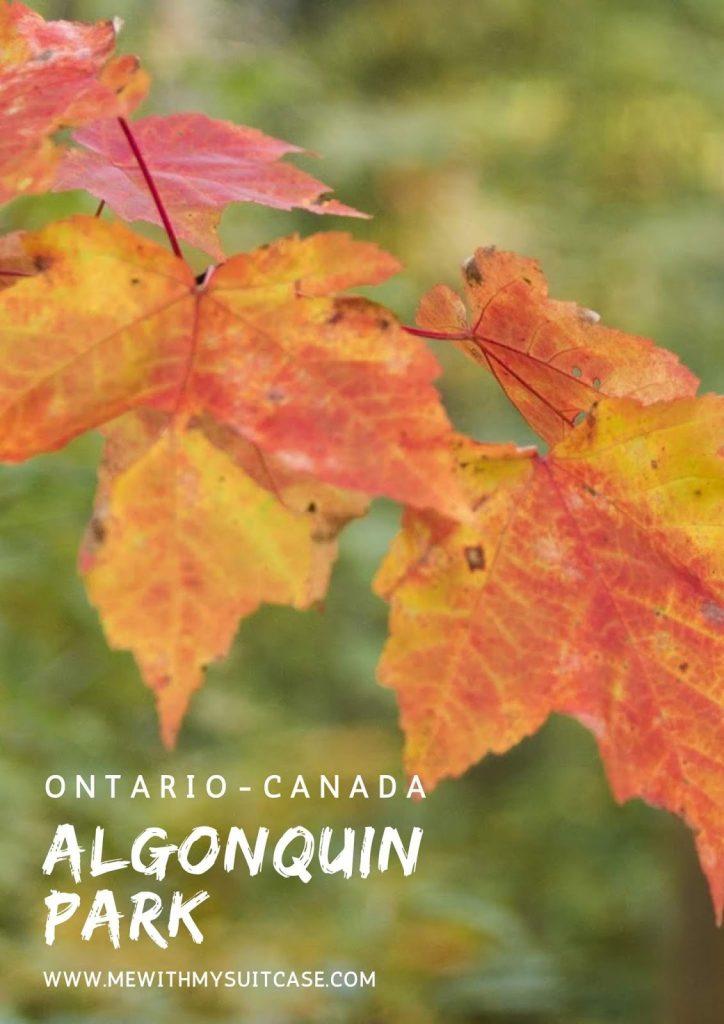 Algonquin Park Canada
