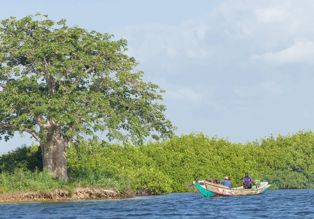 Pirogue Tour in Siné-Saloum Delta