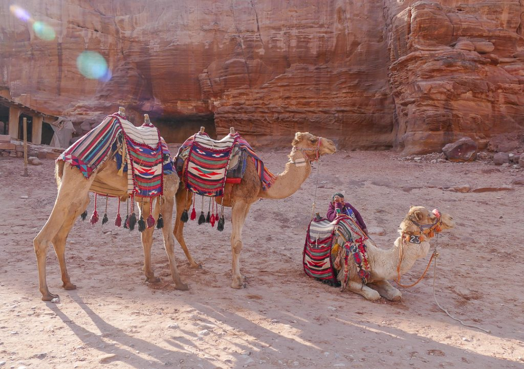 Camel ride in Petra
