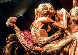 Body Worlds Exhibition