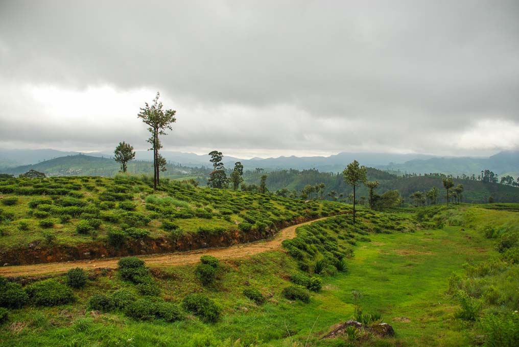 train journey to nuwara eliya